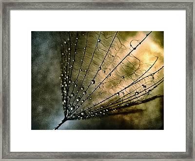Tearcatcher Framed Print by Marianna Mills