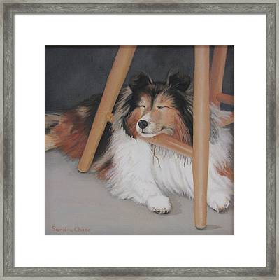 Teddy In My Studio Framed Print by Sandra Chase