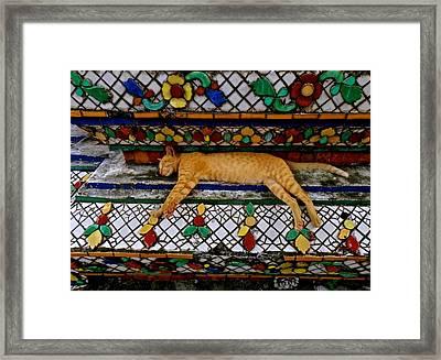 Temple Cat Nap Framed Print by Joe Wyman