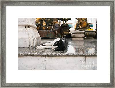 Temple Cats Framed Print by Dean Harte