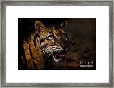 Tenacious Embers Framed Print by Ashley Vincent
