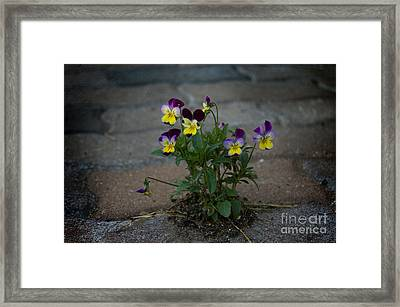 Tenacity Comes In Small Packages Framed Print by The Stone Age