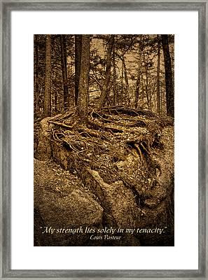 Tenacity - Roots - Inspirational Quote Framed Print by Nikolyn McDonald