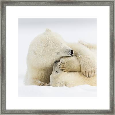 Tender Embrace Framed Print by Tim Grams