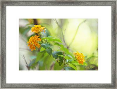 Tenderness Of Morning Framed Print by Jenny Rainbow