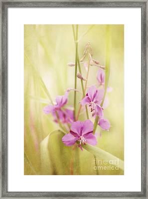Tendresse Framed Print by Priska Wettstein