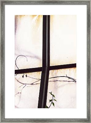 Tendrils Framed Print by Margie Hurwich