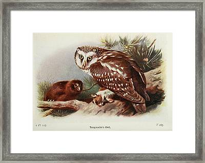 Tengmalms Owl Framed Print by Philip Ralley