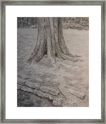 Tennessee Tree And Rock Wall Framed Print by Arthur Witulski
