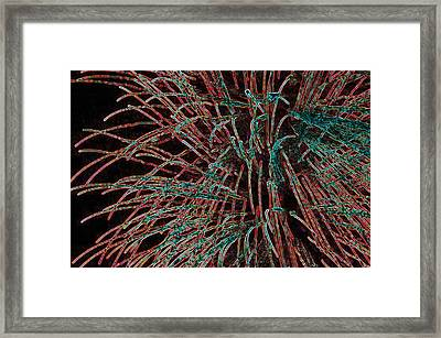 Tentacles Of Light Framed Print by Anthony Dalton