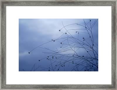 Tentaculos Del Cielo Framed Print by Guido Montanes Castillo