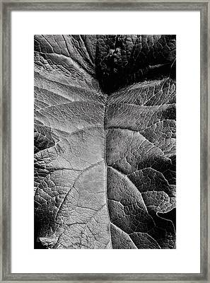 Terrestrial  Framed Print by JC Findley