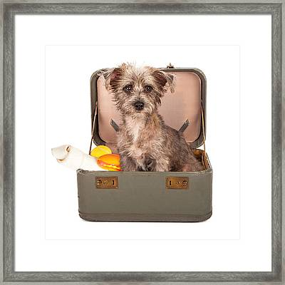 Terrier Dog In Suitcase Framed Print by Susan  Schmitz