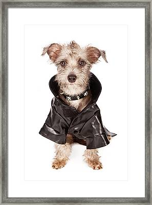 Terrier Dog With Spiked Collar And Leather Jacket Framed Print by Susan  Schmitz
