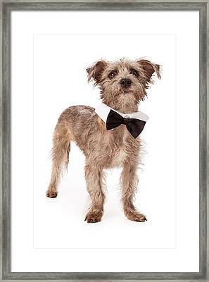 Terrier Mix Wearing Bow Tie Framed Print by Susan  Schmitz