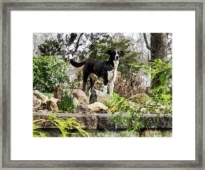 Terrier Standing Guard Framed Print by Susan Savad