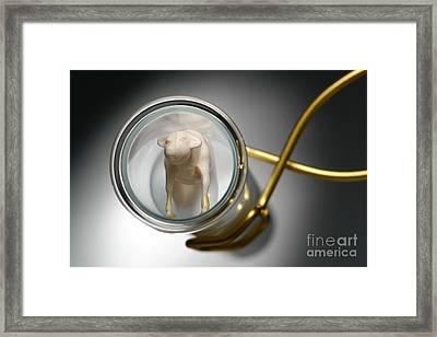 Test Tube Calf Framed Print by Olivier Le Queinec