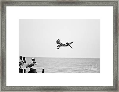Testing The Wind Framed Print by Scott Pellegrin