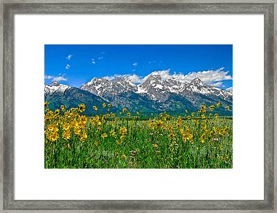 Teton Peaks And Flowers Framed Print by Greg Norrell