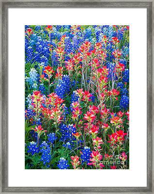 Texan Quilt Framed Print by Inge Johnsson