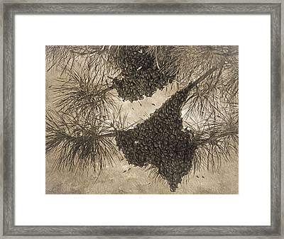 Texas Bees ? Framed Print by Donna Kennedy