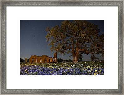 Texas Blue Bonnets At Night Framed Print by Keith Kapple