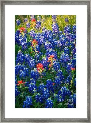 Texas Colors Framed Print by Inge Johnsson