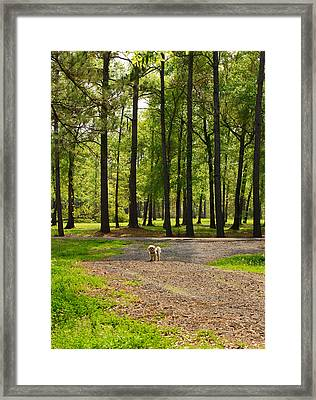 Texas Guard Dog Framed Print by Connie Fox
