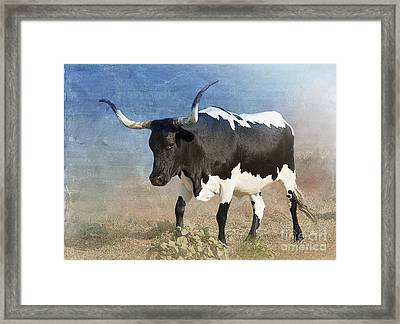 Texas Longhorn #7 Framed Print by Betty LaRue