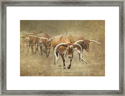 Texas Longhorns 2 Framed Print by Angie Vogel