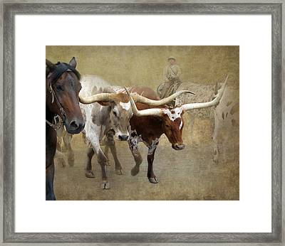 Texas Longhorns Framed Print by Angie Vogel