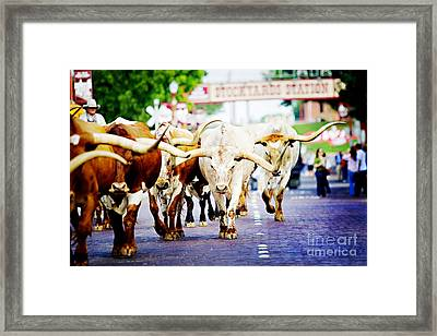 Texas Stockyards Framed Print by Katya Horner