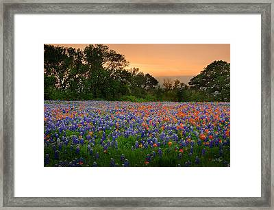 Texas Sunset - Bluebonnet Landscape Wildflowers Framed Print by Jon Holiday