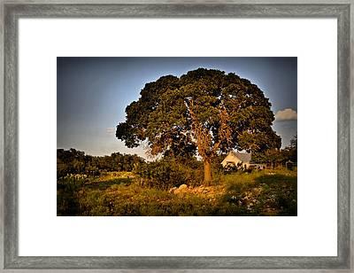 Texas Sunset Framed Print by Linda Unger
