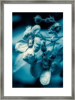 Texture Flower Framed Print by Ken Beatty