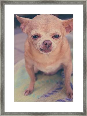 That Little Face Framed Print by Laurie Search