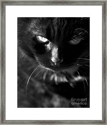 That Look Framed Print by Anne Gilbert