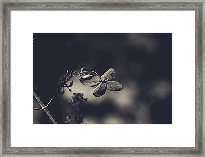 That Special Warmth Framed Print by Laurie Search