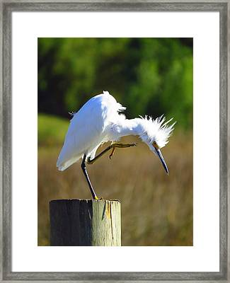 Thats The Spot Framed Print by Phyllis Beiser