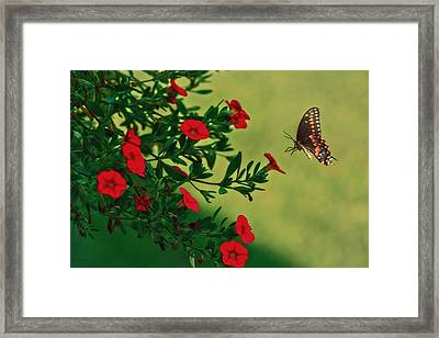 The Approach Framed Print by Tom York Images