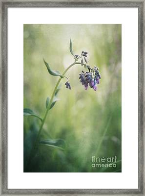 The Arrival Of Spring Framed Print by Priska Wettstein