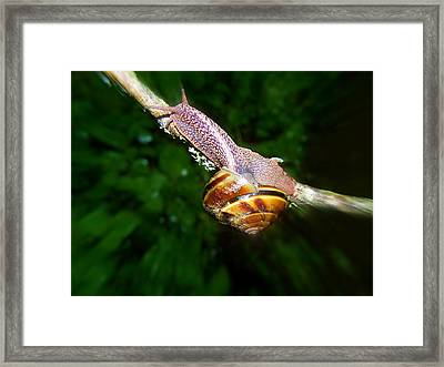 The Art Of Mollusk Calesthenics Framed Print by Heather L Wright