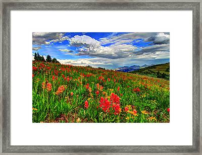The Art Of Wildflowers Framed Print by Scott Mahon