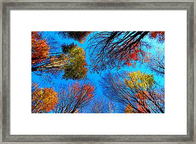 The Autumn Leaves At Potato Creek Framed Print by Tina M Wenger