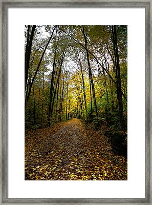 The Back Roads Of Autumn Framed Print by David Patterson