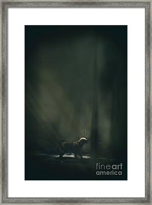 The Bark Framed Print by Margie Hurwich