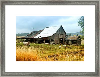 The Barnyard Bunch Framed Print by Mary Timman