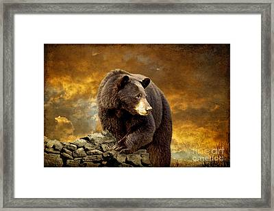 The Bear Went Over The Mountain Framed Print by Lois Bryan