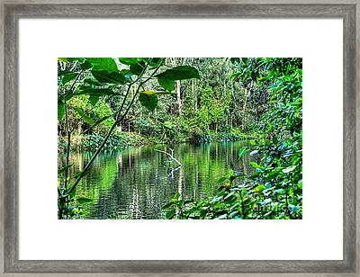 The Beautiful Greens Of Nature Framed Print by Kaye Menner