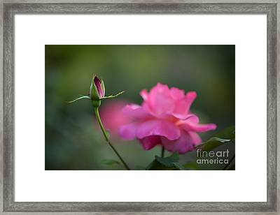 The Beauty And The Promise Framed Print by Mike Reid